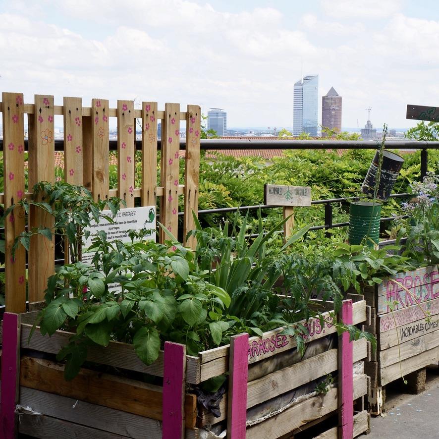 Biodiversité et agriculture urbaine : une réalité bien ancrée sur le terrain